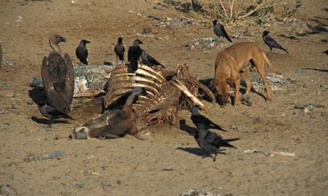 药物污染可能导致野生动物数量下降