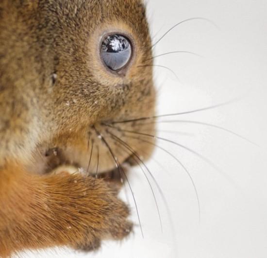 首页 环保动态 国际动态  原标题:趣味摄影:呆萌可爱的动物吃货们
