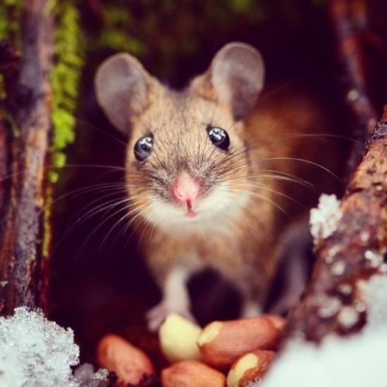 呆萌可爱的动物吃货们(图片)